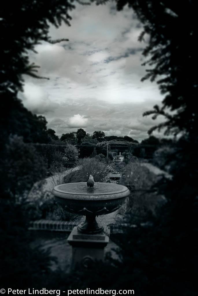 The Garden of...