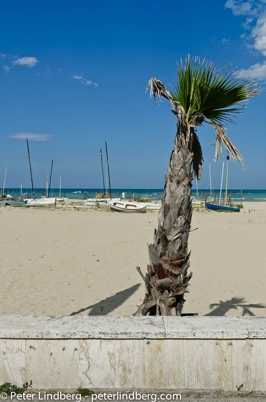 A lone palm by the beach in Roseto degli Abruzzo